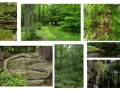 ANF Forest Sites
