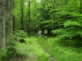 ANF Hiking - Trail Central - McKean County, PA