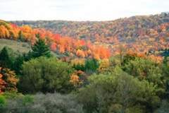 Fall Foliage - Allegheny National Forest, PA