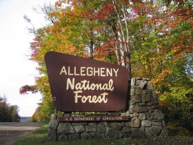 Fall in the Allegheny National Forest of McKean County, PA