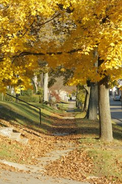 Fall Foliage - Smethport, PA