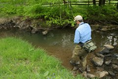 Wild Trout Stream in the Allegheny National Forest
